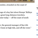ABC News Kemps Ridley Sea Turtle